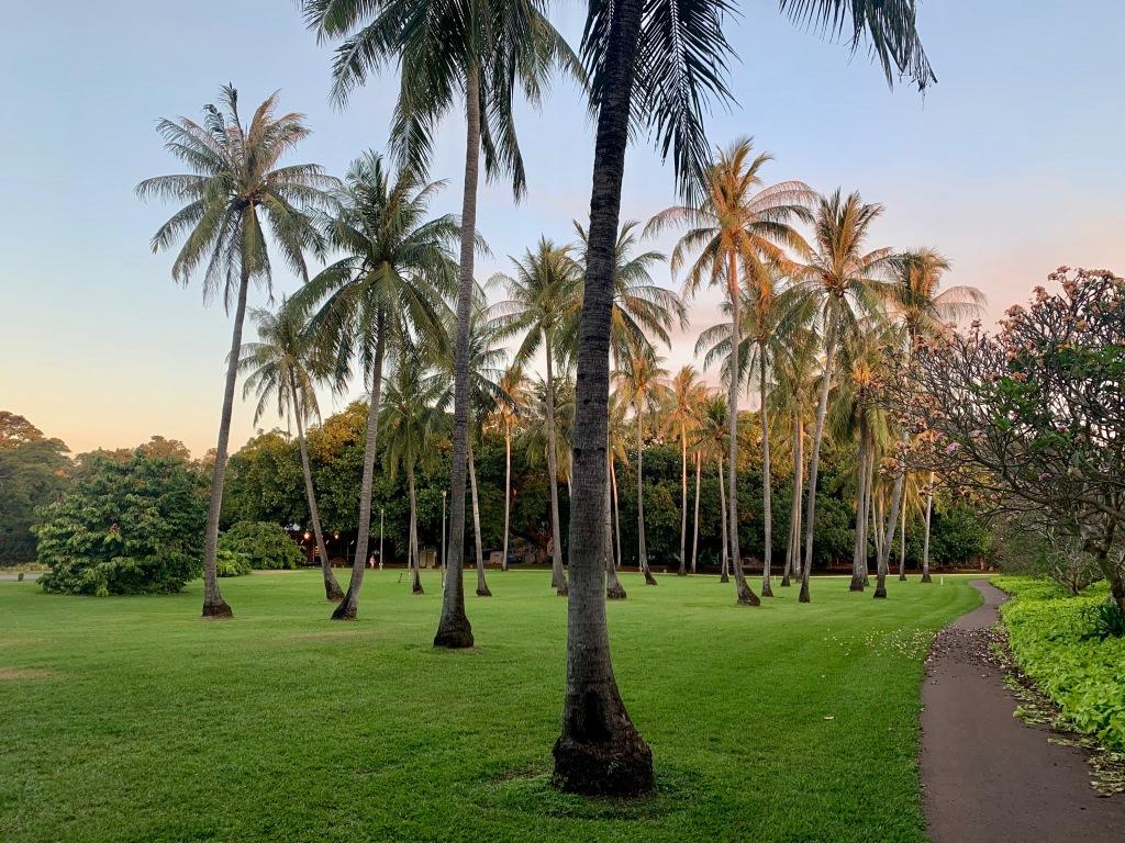 Palm trees at Darwin Botanic Gardens
