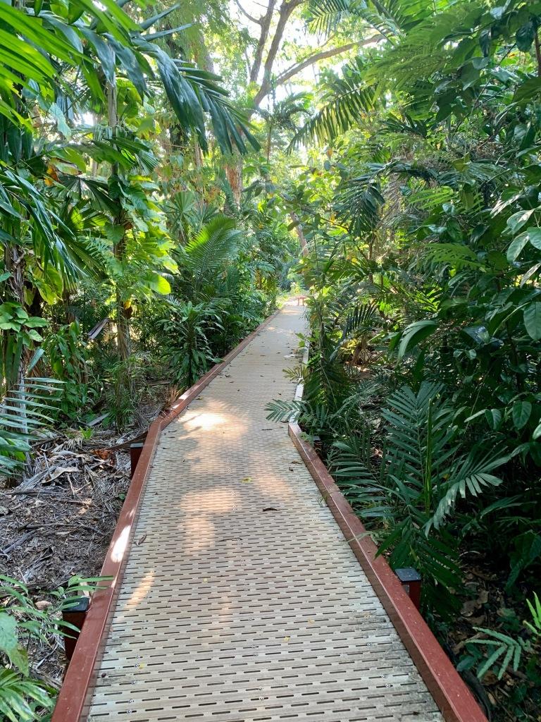 Rainforest in Botanic Gardens Darwin