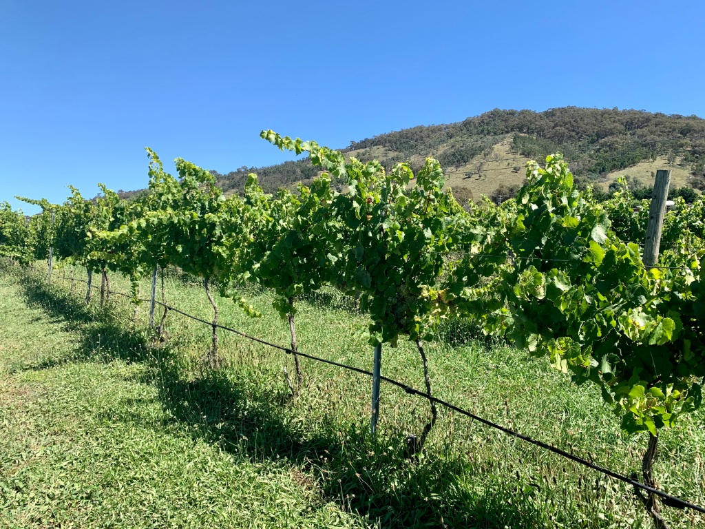 Vineyards at Lake George