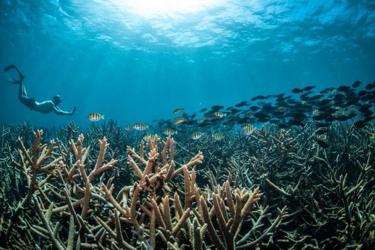 Snorkelling in Ningaloo Reef Coral Bay